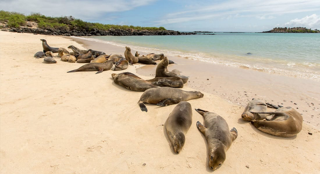 Santa Fe Galapagos