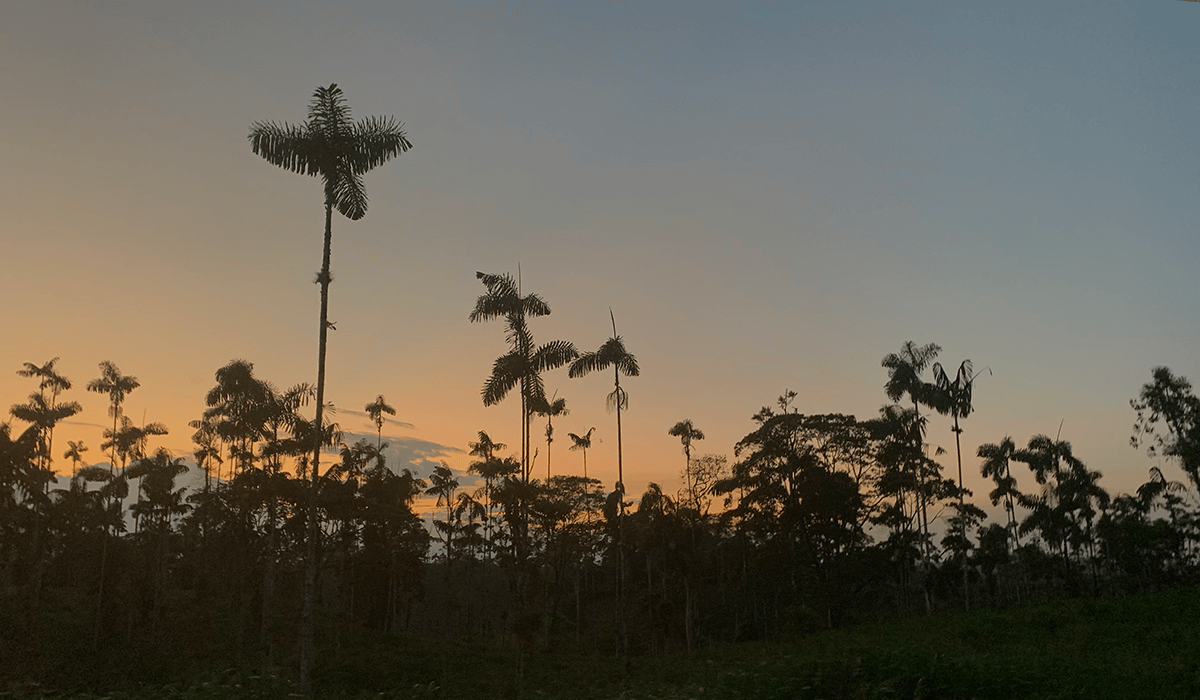 Ecuador Amazon lodges: which is the best for you?