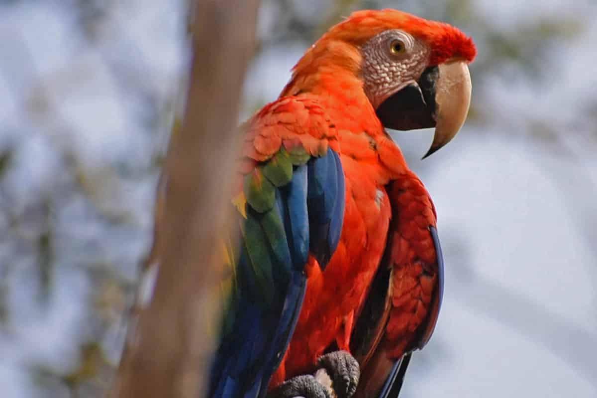 Amazon Rainforest Day Tour