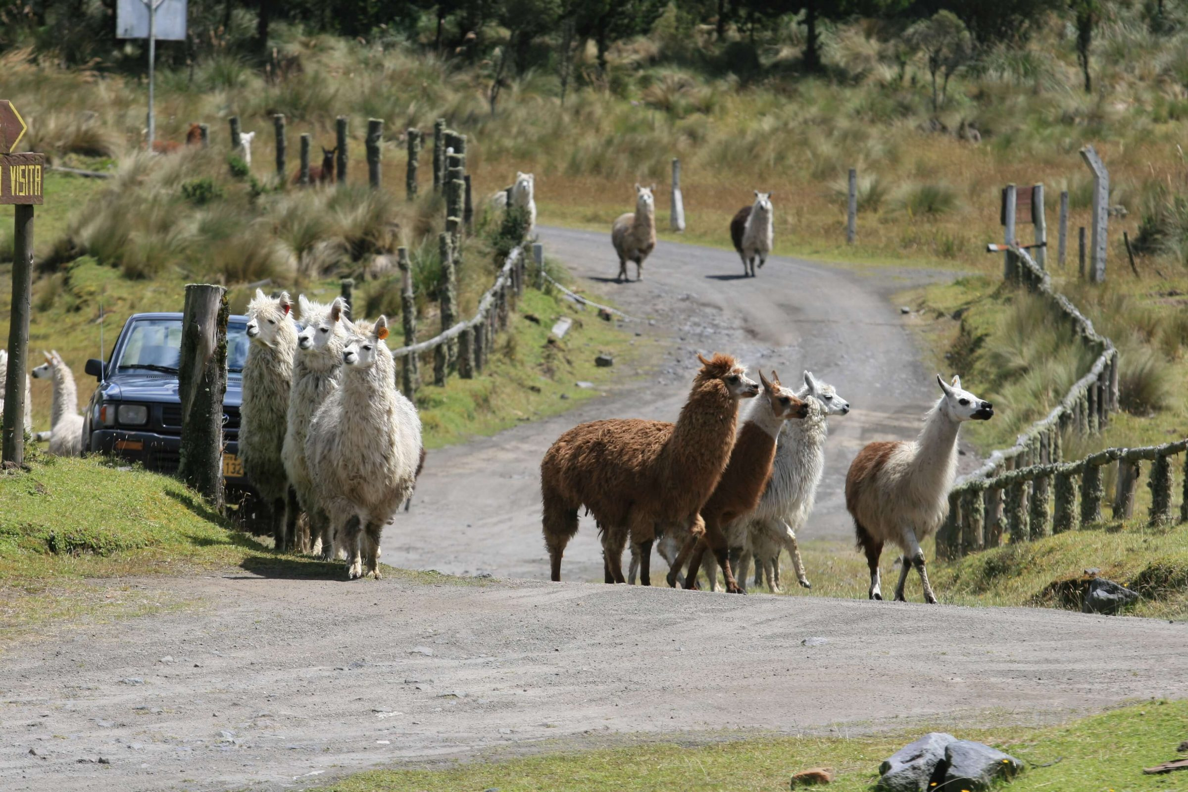 Cotopaxi National Park is a tour attraction suitable for everyone