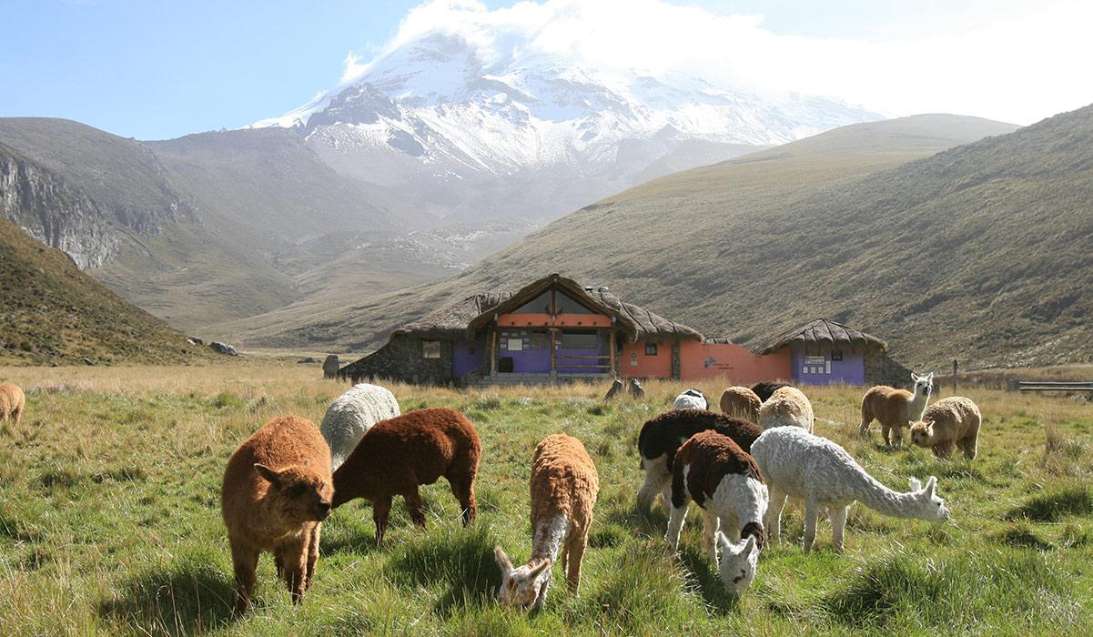 Chimborazo Ecuador