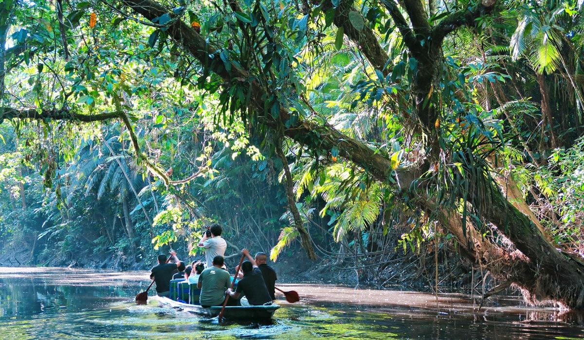 Amazon Jungle from Baños