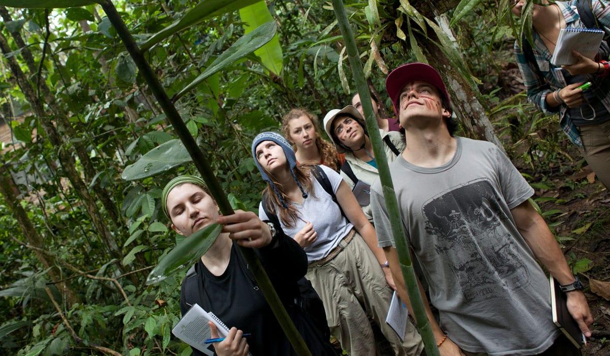 Ecuador jungle tour
